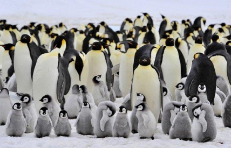NASA разыскивает детективов для исследования пингвинов в Антарктике