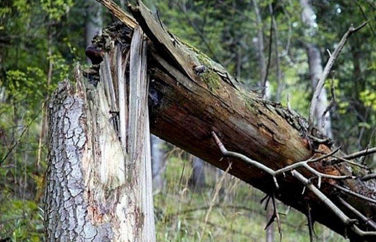 """У Хмільнику на """"Mitsubishi Pajero"""" впало дерево"""