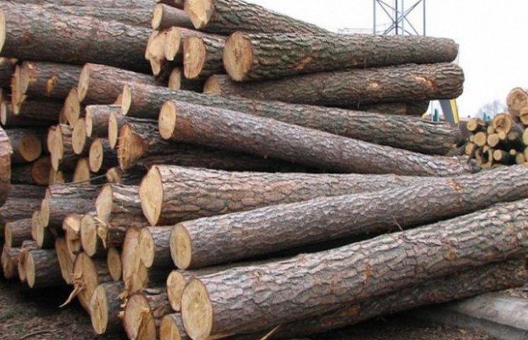 Незаконний продаж лісу на майже півмільйона виявили на Хмельниччині