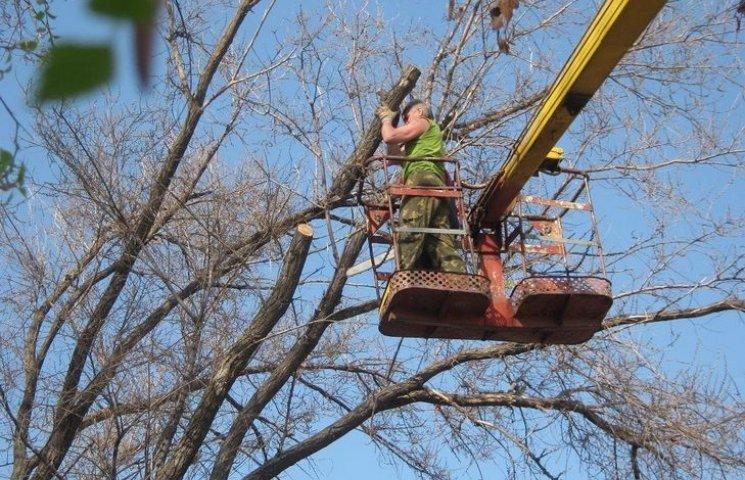 Горсовет заплатит 900 тысяч, чтобы срубить деревья в Виннице