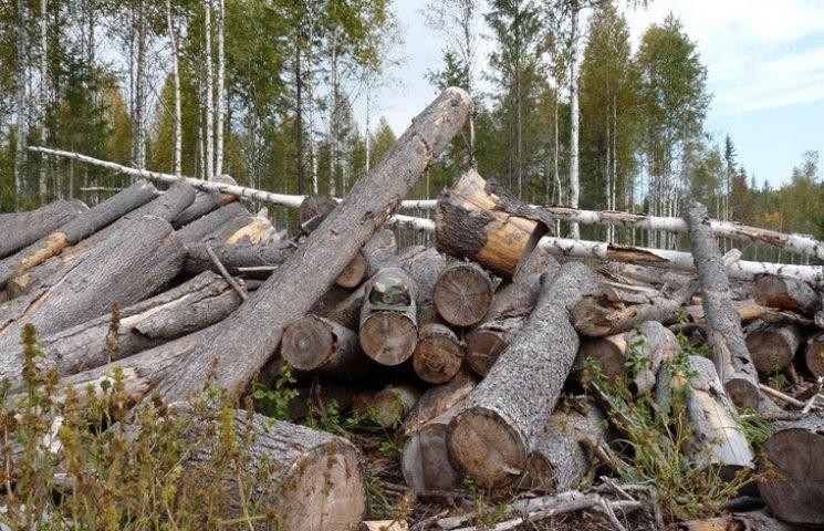 """На """"лівій"""" деревині вінницькі спритники незаконно заробляли десятки мільйонів гривень"""