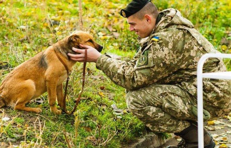 Миколаївські морпіхи дали старт акції з пошуку домівки безпритульним собакам