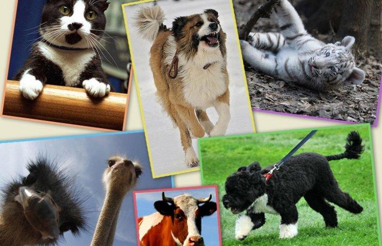 Політики та тварини: вгадай де чий улюбленець