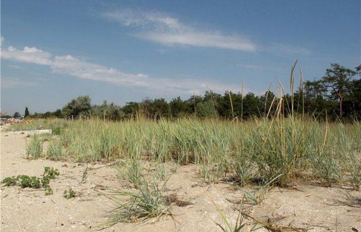 На Миколаївщині землі лісового господарства незаконно віддали під готель