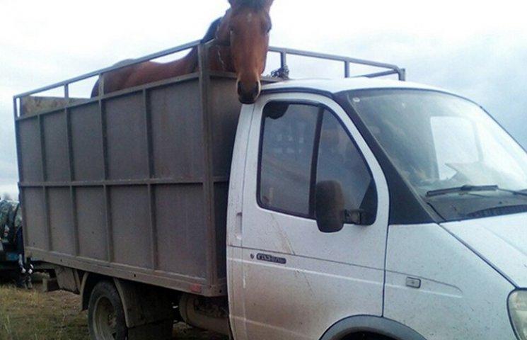 На Деражнянщині затримали викрадачів худоби