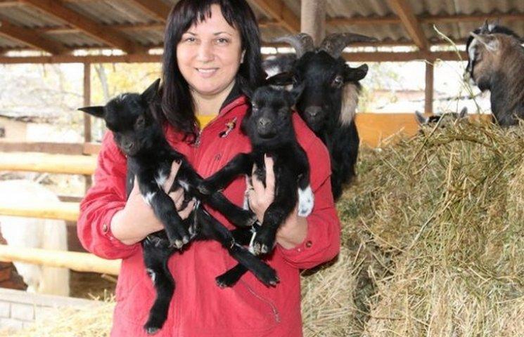 В Виннице камерунская карликовая коза родила двойню