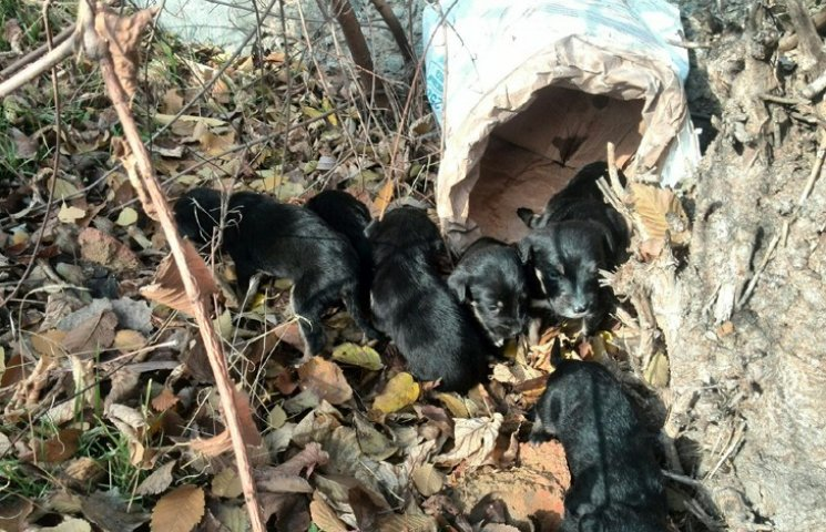 У Мелітополі врятували маленьких цуценят від смерті