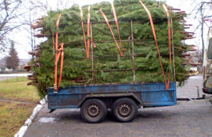 Харьковчанин планировал обогатиться на новогодних соснах с Полтавщины