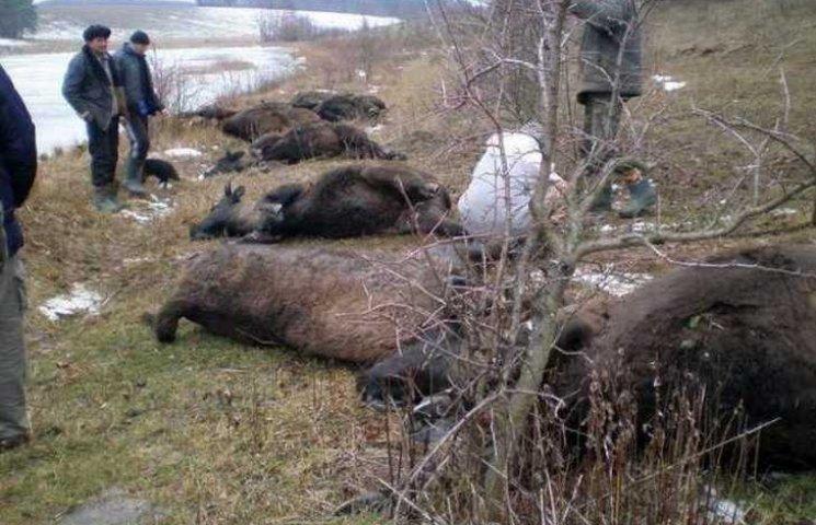 Захисники тварин вимагають, щоб вінницька ОДА заплатила 3 млн грн за зубрів-потопельників