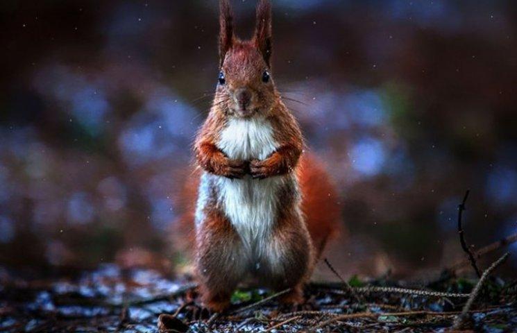 Удивительные фото животных от украинского фотографа покорили мир