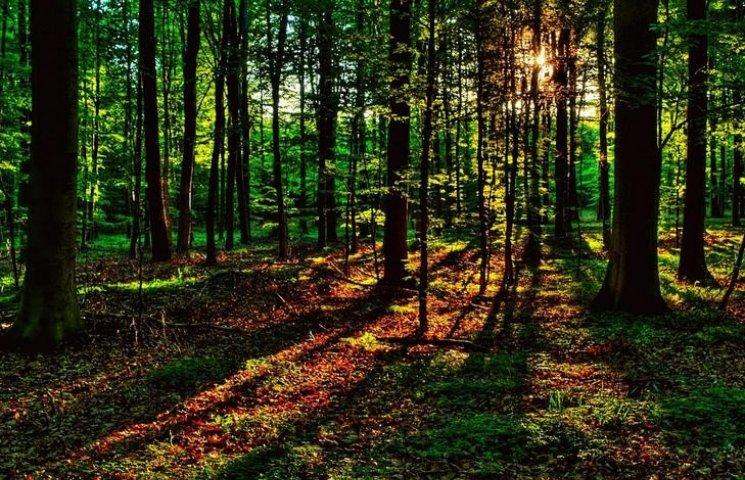 """Скандальный вопрос о подозрительном """"дерибане"""" леса в Виннице сняли с рассмотрения сессии"""