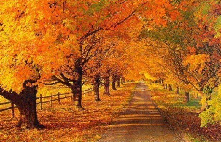 Закарпаття: прогноз погоди на 20 листопа…