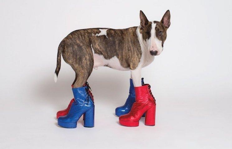 Как поживает самая модная собака в мире (ФОТО, ВИДЕО)