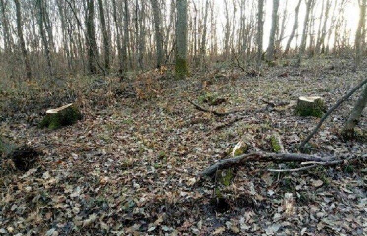 На Харківщині знищили дерев на півмільйона гривень