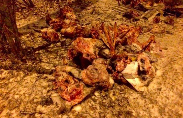 Роги і копита: У центрі Полтави перехожі виявили скелети корів