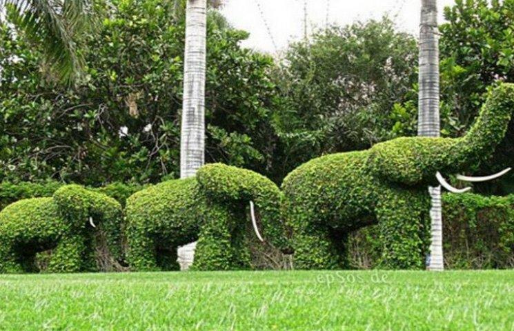 В Днипре хотят установить wi-fi деревья…
