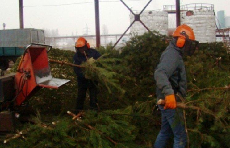В Днипре школы и садики новогодними елками будут отапливать
