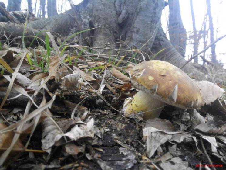 У Карпатах все ще збирають гриби (ФОТО)