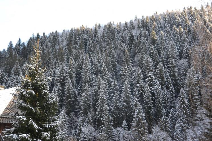 Синевир: прийшла зима