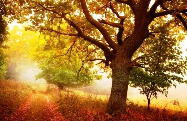 Чому третього листопада не варто подорожувати і краще не наближатися до доріг