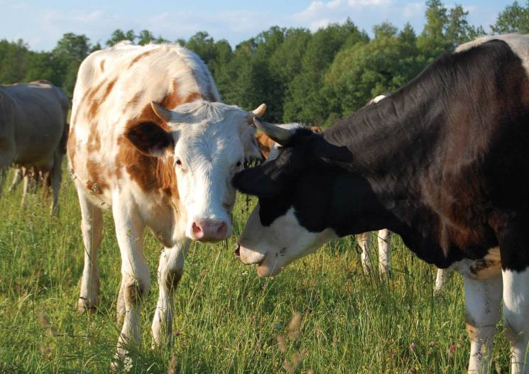 Молодик з Житомирщини крав худобу на Тер…