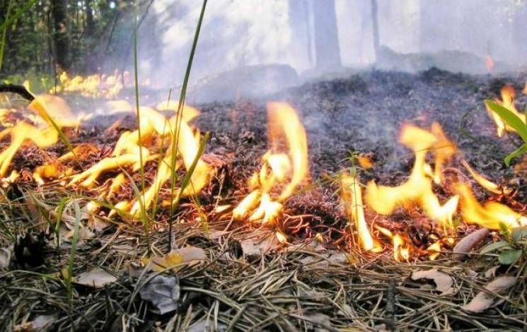 На Тячівщині сталася велика пожежа на ві…