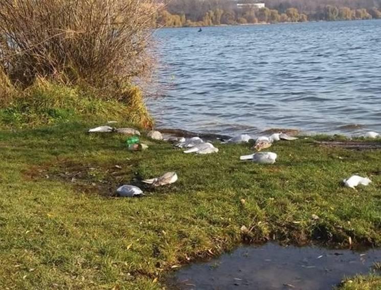 Майже дві сотні трупів перелітних птахів виявили поблизу Тернопільського ставу (ФОТО)