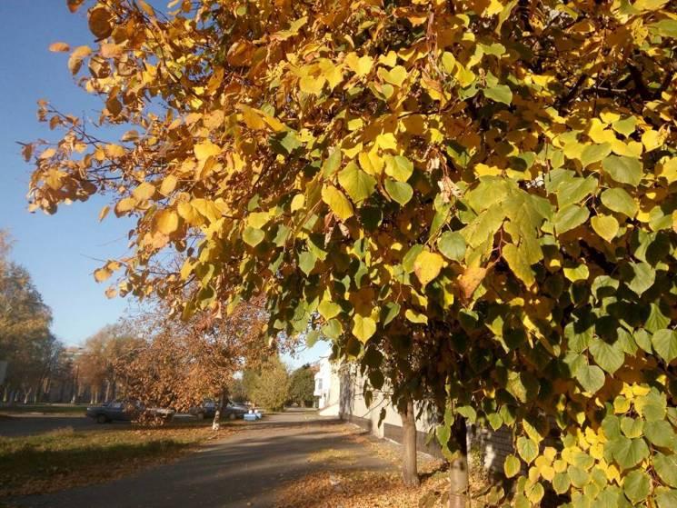 Ясно та без опадів: Якої погоди чекати у Черкасах 8 листопада