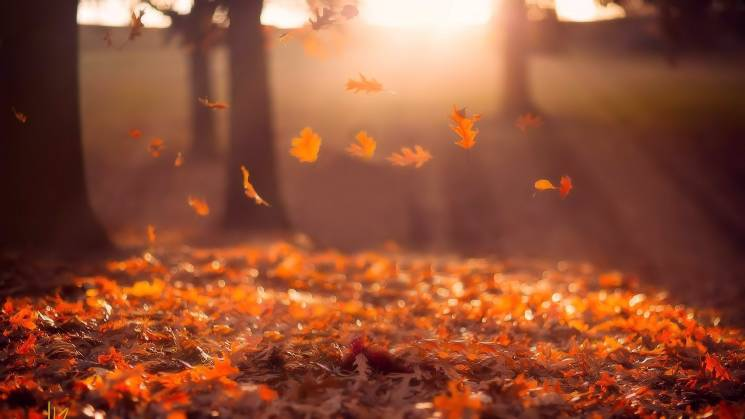 """Сонячний листопад: У Києві туманно, а вночі температура """"впаде"""" до -4°С (КАРТА)"""