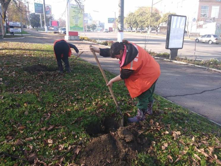 У Кропивницькому висадили дерева на алеї сакур (ФОТО)