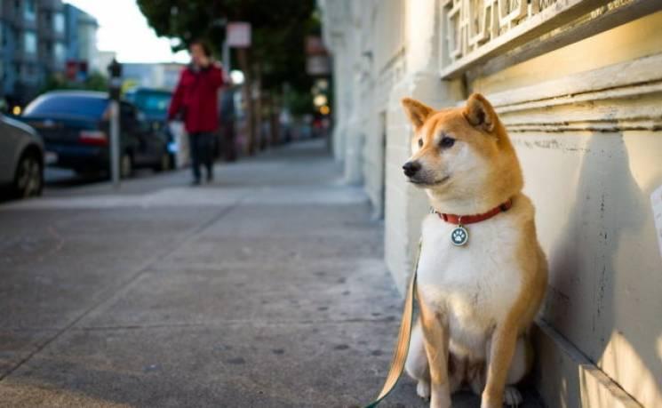 Чим потішать львівських собак у найближчі 10 років