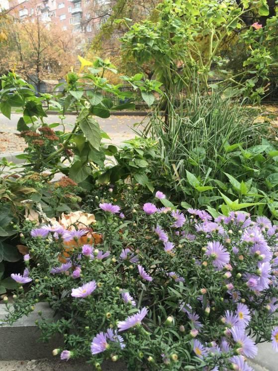 Стало відомо, чому у Дніпрі восени масово цвітуть рослини