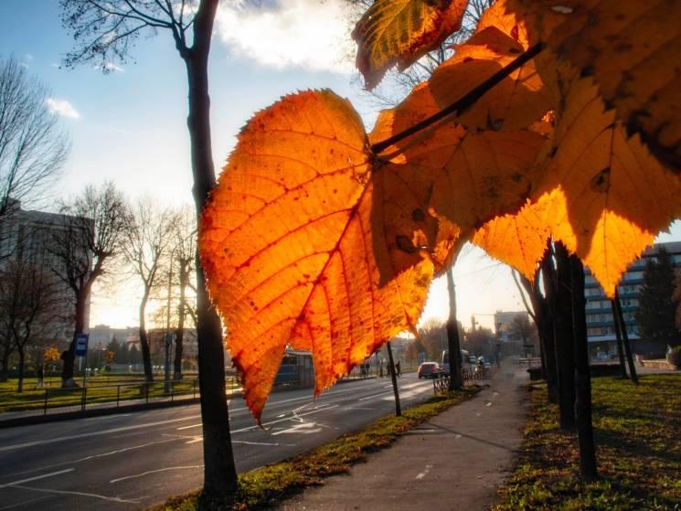 П'ятниця порадує вінничан осіннім сонцем