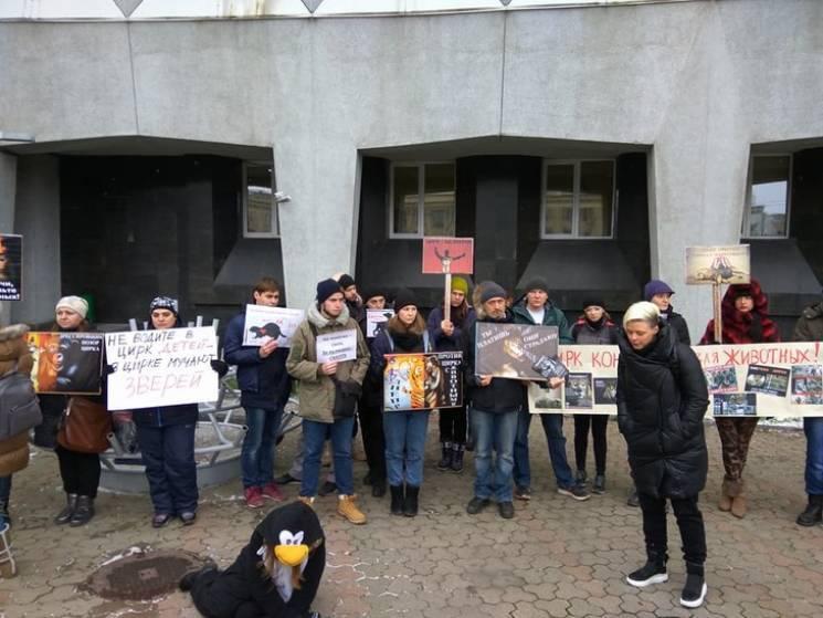 В столицу Западного Донбасса не пустят цирк со львами и тиграми