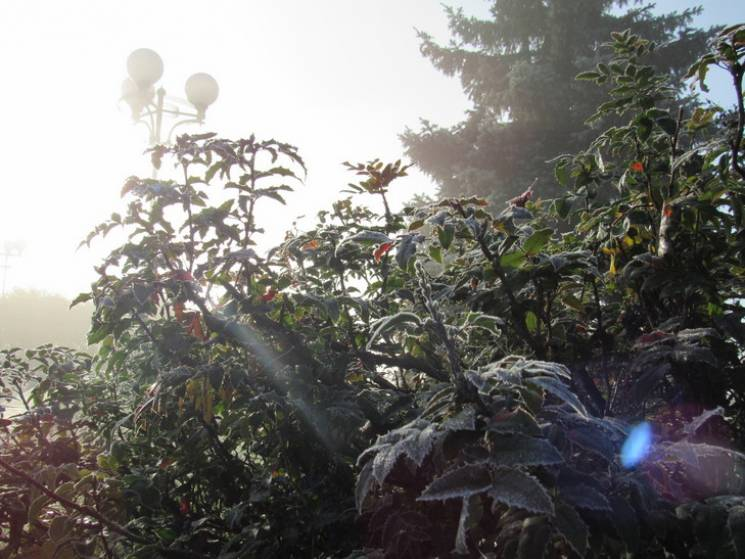 Хмарно та без опадів: Якої погоди чекати у Черкасах 10 листопада