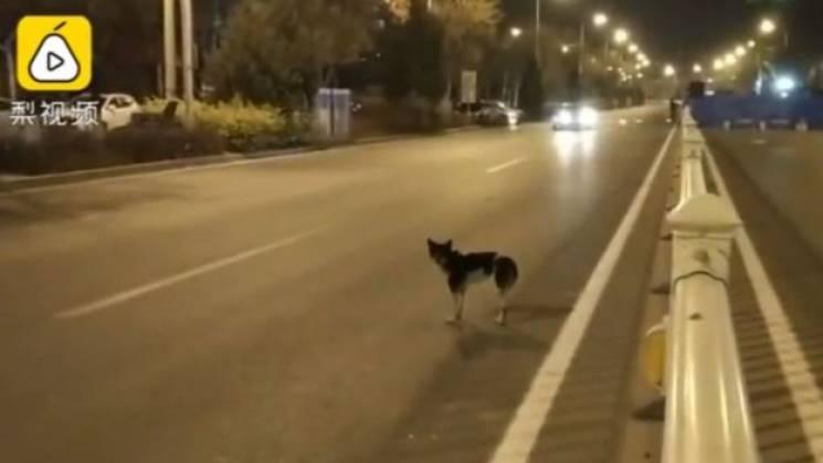 У Китаї пес три місяці чекає господарку на місці її загибелі (ФОТО, ВІДЕО)