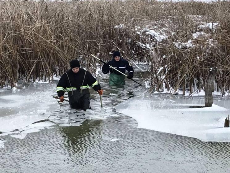 На Вінниччині двоє лебедів примерзли до криги (ФОТО)