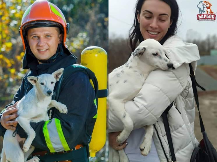 Закарпатські рятувальникам допомогли знайти нові домівки для 10 чотирилапих друзів (ФОТО)