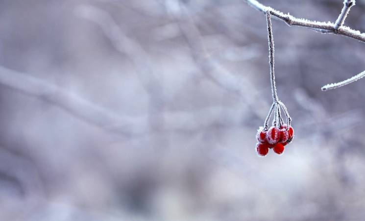 Туристичні лайфхаки, світова анімація, фест короткометражок: Як не згаяти початок зими в Запоріжжі