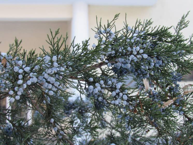 Похмурий сніжний день: Якої погоди чекати у Черкасах 1 грудня