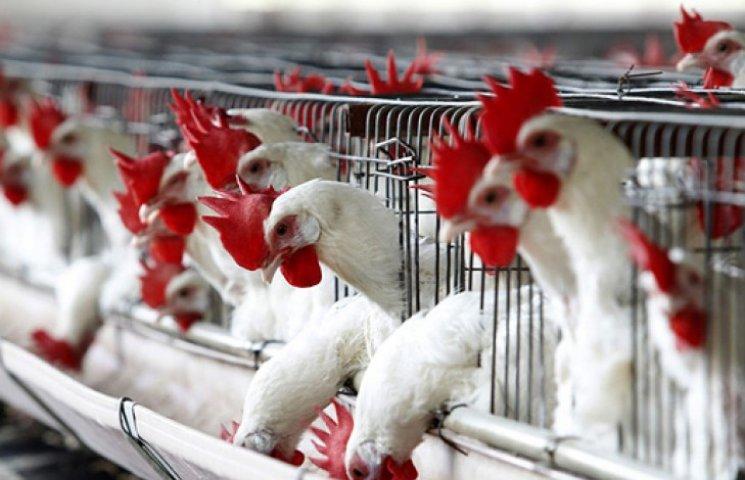 Ввоз мяса из Крыма в Украину запрещен из-за чумы и гриппа