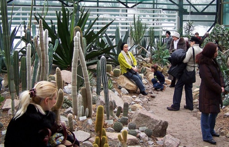 Киевский ботсад топят пальмами и кактусами
