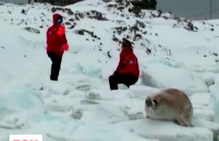 Избиратели в костюмах и «пингвины-наблюдатели»: как голосовали в Антарктиде