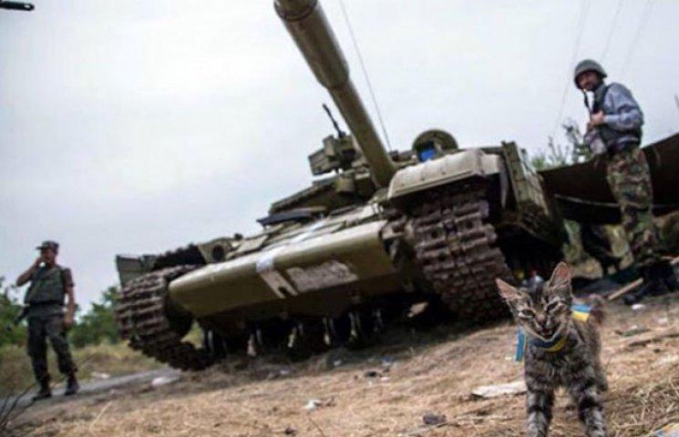 За что украинские военные поставят памятники котам