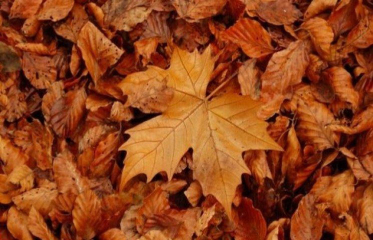 У Садового винними у потопах призначили листя (ФОТО, ВІДЕО)