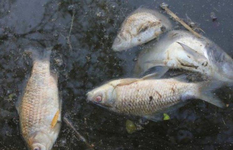 На Вінниччині шукають, хто потравив рибу у ставку