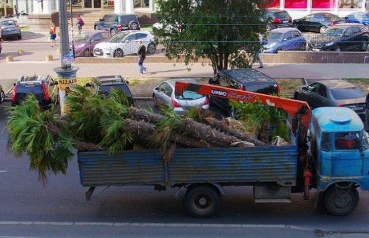 З одеської Аркадії зникли пальми