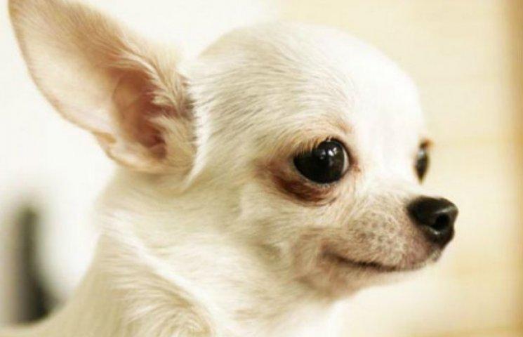 У Кременчуці відловлюють бродячих собак заради безпеки Порошенка