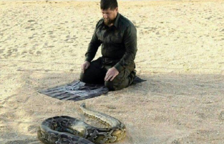 """Як Кадиров душив змія заради """"миру в світі"""""""
