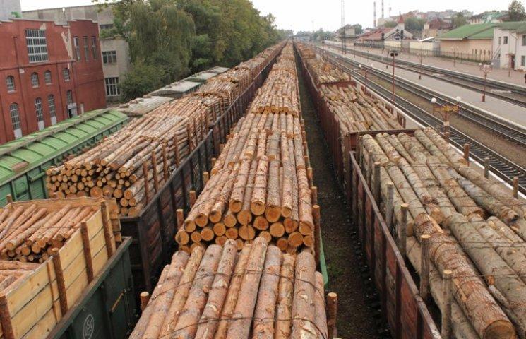 """З Хмельниччини за кордон вивезли """"лівої"""" деревини на 45 мільйонів гривень"""